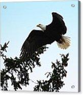 Olympic Bald Eagle Acrylic Print