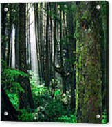 Olympic Forest Acrylic Print by Ric Soulen