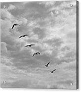 On A Mission - Black And White Acrylic Print