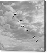 On A Mission In Black And White Squared Acrylic Print