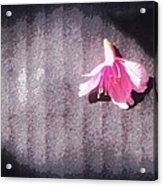 On Stage Acrylic Print