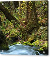 On The Banks Of Big Spring In The Missouri Ozarks Acrylic Print