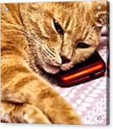 On The Phone Acrylic Print