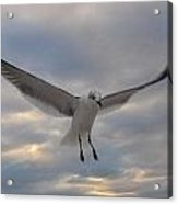 On The Wings Of Acrylic Print