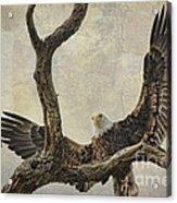 On Wings High Acrylic Print
