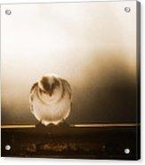 On Winters Edge Acrylic Print
