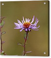 One Blossom Left Acrylic Print