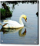One Foot At Ease Swan Acrylic Print