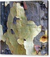 One Good Looking Bark Acrylic Print