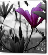 One In The Bunch Acrylic Print
