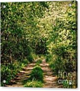 One Lonely Path Acrylic Print