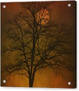 One Lonely Tree Acrylic Print by Tom York Images