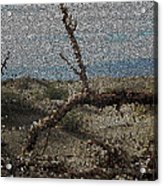 One Majastic Trunk And One Hot Desert Acrylic Print