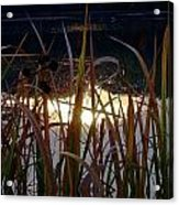 One Of A Million Soddy Lake Acrylic Print