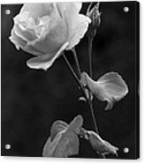 One Rose In Black And White Acrylic Print
