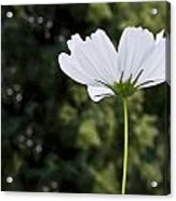One Wildflower Acrylic Print