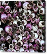 Onion Power Acrylic Print