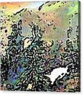 Opal Morning Acrylic Print