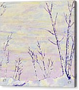 Opalescent Winter Acrylic Print by Sharon Gill