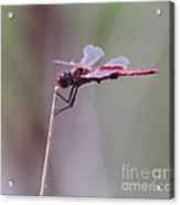 Open Mic Night At The Swamp Acrylic Print