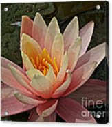 Open To Possibilities Acrylic Print