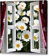 Open Windows Onto Large Daisies Acrylic Print