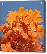 Orange Autumn Leaves Art Prints Blue Sky Acrylic Print