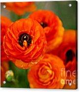 Orange Bulbs Acrylic Print