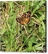 Orange Butterfly Acrylic Print