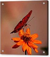 Orange Butterfly Orange Flower Acrylic Print
