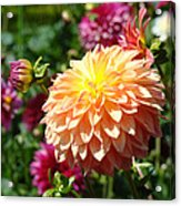 Orange Dahlia Flower Floral Fine Art Photography Acrylic Print by Baslee Troutman