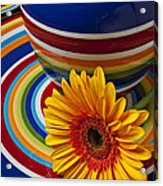 Orange Daisy With Plate And Vase Acrylic Print