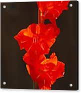 Orange Fire Acrylic Print