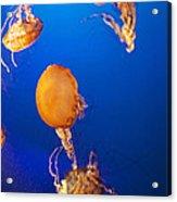 Orange Jellies Acrylic Print