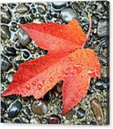Orange Leaf Acrylic Print