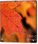 Orange Maple Leaf Acrylic Print by Chris Hill