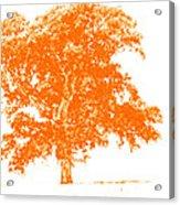 Orange Oak Acrylic Print