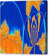 Orange Plumes Acrylic Print