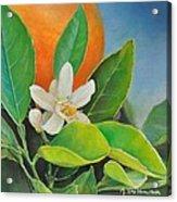 Orange Posee Acrylic Print
