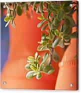 Orange Pots Of The Jardin Marjorelle Morocco Acrylic Print