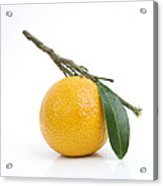 Orange Satsuma Acrylic Print by Bernard Jaubert