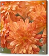 Orange Sherbert Acrylic Print