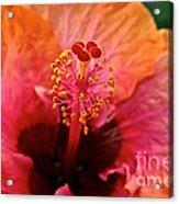 Orange Sherbert Hibiscus Acrylic Print