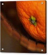 Orange Sunshine Acrylic Print