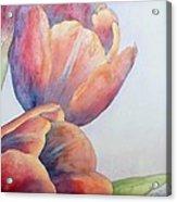 Orange Tulips II Acrylic Print