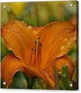 Orange Uglad Acrylic Print