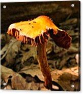 Orange Wild Mushroom Acrylic Print