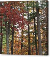 Orange Woods Acrylic Print