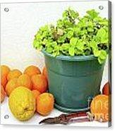 Oranges And Vase Acrylic Print