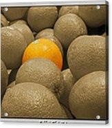 Oranges S.c.  Acrylic Print
